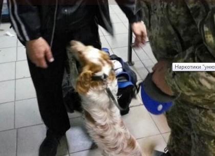 Служебная собака не пропустила через границу партию психотропов (ФОТО)
