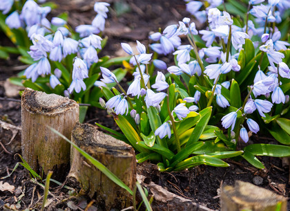 В ботаническом саду на Клочковской распускаются цветы (ФОТО)
