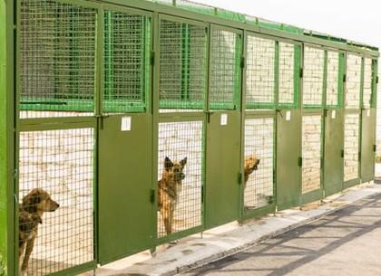 На Центр обращения с животными напала группа неизвестных
