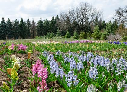 В Харьковском ботаническом саду зацвели гиацинты, примула и сцилла