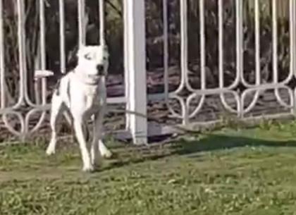 На Новых домах - нападение собаки (ВИДЕО, ОБНОВЛЕНО)