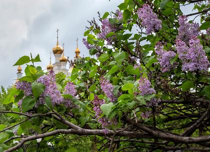 В Харькове зацвели сирень и яблони (ФОТО)