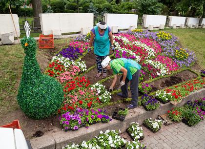 В центре Харькова появились красочный павлин и очень большой фотоаппарат (ФОТО)