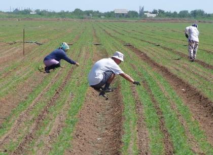 Фискалы сгущают тучи над харьковскими фермерами