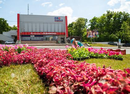 Возле кинотеатра имени Довженко появились национальные орнаменты из цветов (ФОТО)