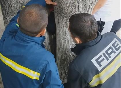 Ребенок заигрался и застрял ногой в дереве, пришлось вызывать спасателей (ФОТО)