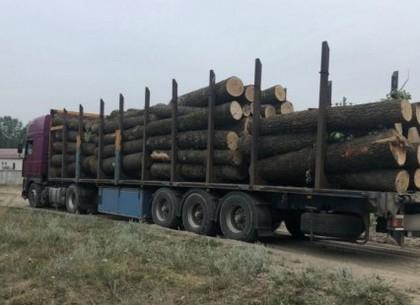 Ночной рейд по лесхозах на Харьковщине: суд отказал в наложении ареста на незаконно срубленную древесину