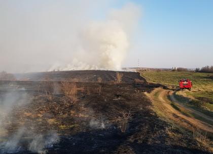 Женщину с ожогами и без сознания нашли возле подожженного поля (ФОТО)