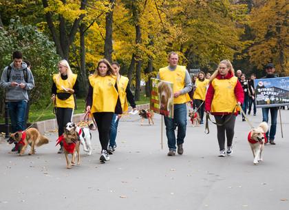 Акция, посвященная животным, прошла на площади Свободы (ФОТО)