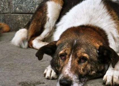 У Харкові найменша кількість бездомних собак