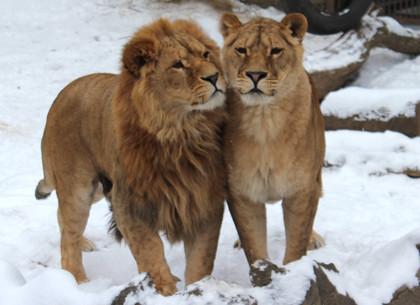 Харьковский зоопарк порадовал поклонников романтическими фото и оригинальными «валентинками» (ФОТО, ВИДЕО)