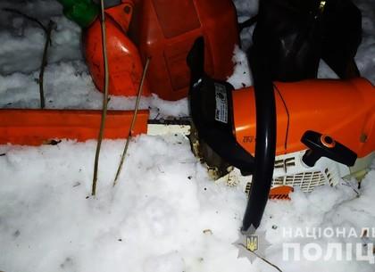 Черные лесорубы: гастролер и местный напилили дубков на семь лет тюрьмы (ФОТО)