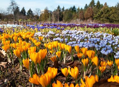 Весна в Харьковском ботаническом саду (ФОТО)