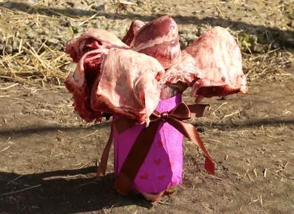 Четвероногие харьковчанки получили необычные букеты (ВИДЕО, ФОТО)