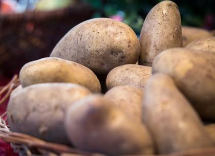 Сезонный рост цен на «старую» картошку в половину превысил прошлогодний