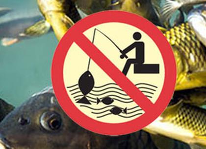 На речках и водоемах Харьковщины наступает нерест рыбы - ловля запрещена