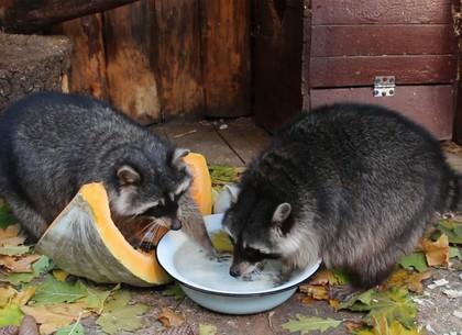Зоопарк на карантине, или Как животые соблюдают гигиену (ВИДЕО, ФОТО)