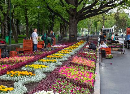 В саду Шевченко продолжается высадка цветов (ФОТО)