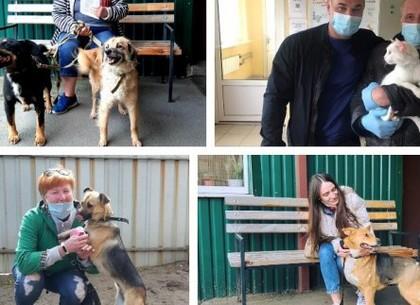Завдяки роботі притулку понад 500 тварин знайшли господарів