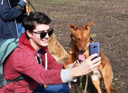 Харківський притулок для тварин відновлює проведення Днів відкритих дверей