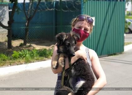 Понад сім тисяч мешканців харківського притулку для тварин знайшли господарів (ФОТО)