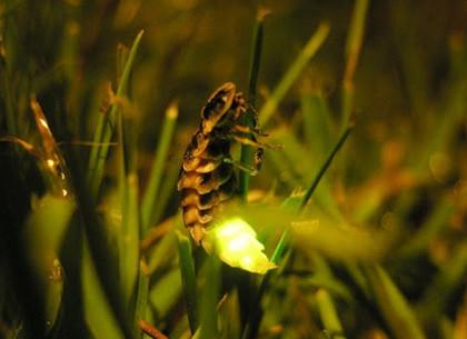 В ночь на Ивана Купала в Харьковском зоопарке наблюдалось необычное свечение.