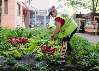 Дворники и озеленители украшают дворы в районах Харькова (ФОТО)