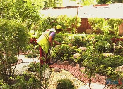 Замість клумб – рокарії: у дворах Київського району посадили понад 70 тисяч квітів і близько 200 дерев (ВІДЕО)