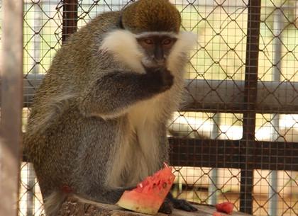 В харьковском зоопарке отметили день арбуза (ВИДЕО, ФОТО)