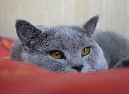 Болезни кошек: признаки, виды и особенности
