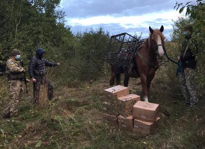 Контрабандиста с копытами задержали на границе (ВИДЕО)