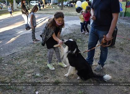 Харківський притулок для тварин проводить «Уроки доброти» (ФОТО)