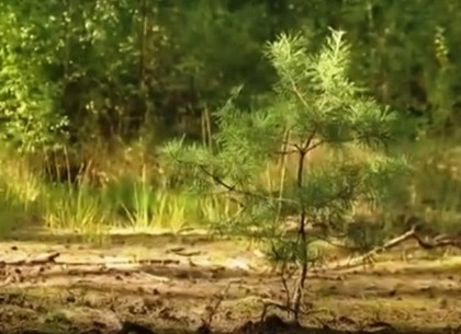 Утро с Интером: как восстанавливают лес?