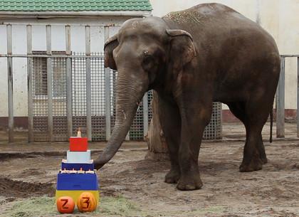 ВИДЕО: Необычному харьковчанину на день рождения подарили интернациональный торт (Зоопарк)