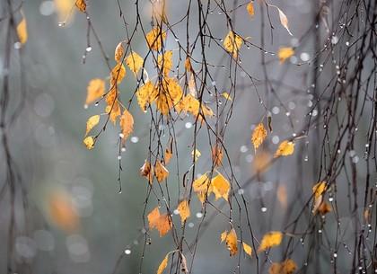 Прогноз погоды и магнитных бурь в Харькове на понедельник, 23 ноября (РЕДПОСТ)