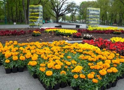 В городе высадят более двух миллионов цветов и полтысячи деревьев