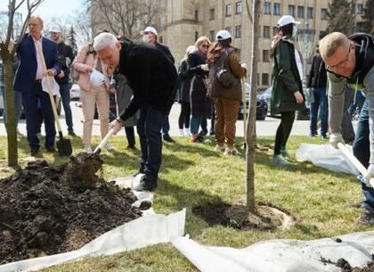 В сквере на площади Свободы высадили 20 сакур и 4 магнолии