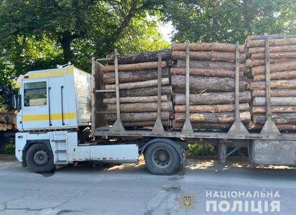 Напилили три машины сосен: в Харькове поймали незаконных вырубщиков (ФОТО)