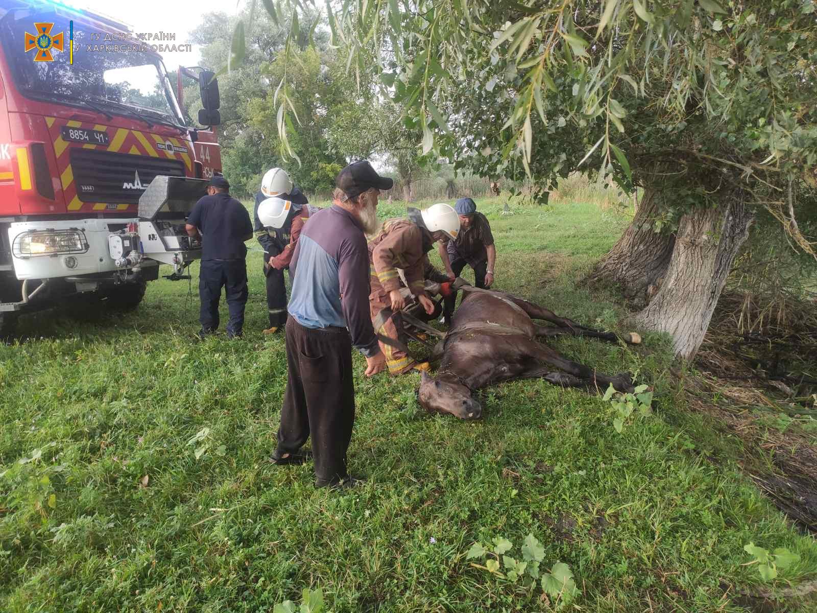 Конь в яме застрял под Харьковом
