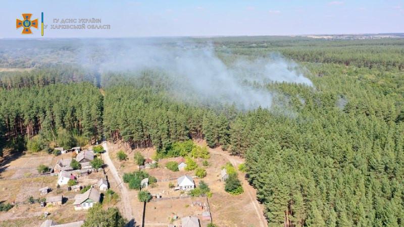 Хвойный лес горел в Изюмском районе под Харьковом